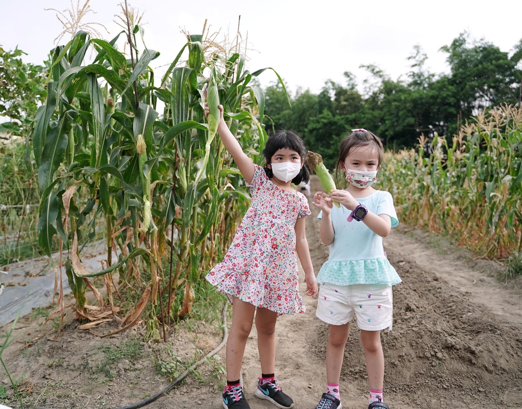 苗栗西湖四季豐收食農之旅|綠景複合農園|農人體驗現採現煮玉米超好吃