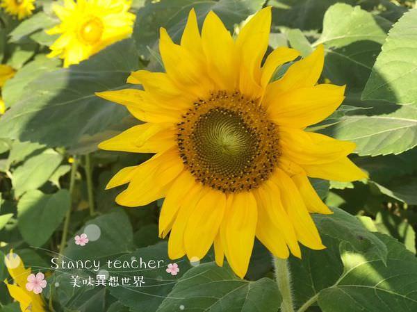 割稻飯_181202_0047.jpg