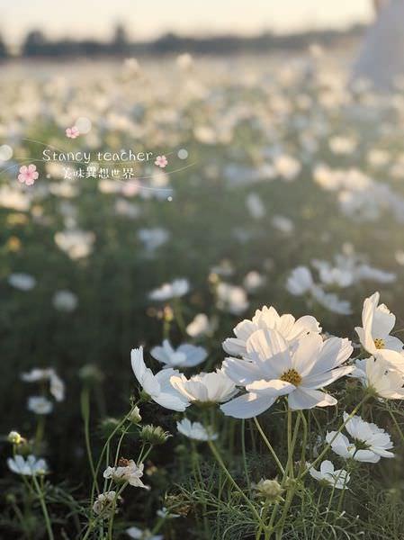 割稻飯_181202_0038.jpg
